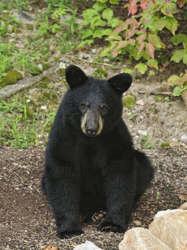 young-bear-1-lara-ellis